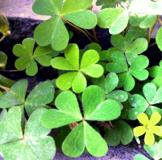Leaf Natural Pattern Pattern