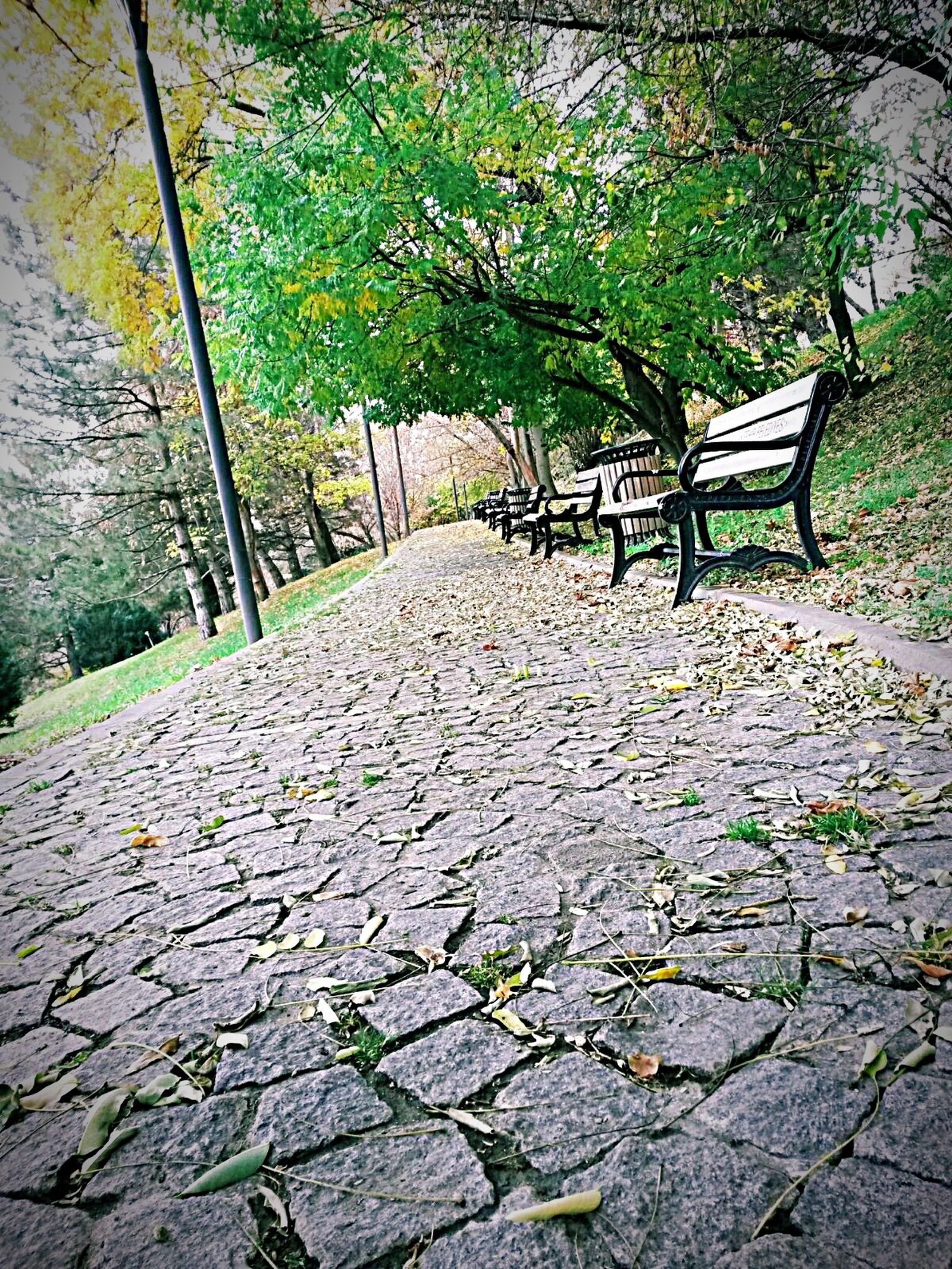 Autumn EyeEm Taking Photos 🌳🌿🍂❄️