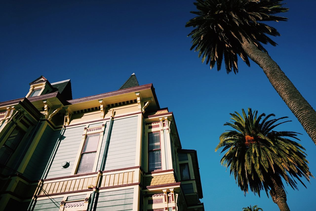 Santa Cruz, CA // Low Angle View Palm Tree Clear Sky Blue No People Architecture Outdoors Building Exterior Day Tree Built Structure Sky