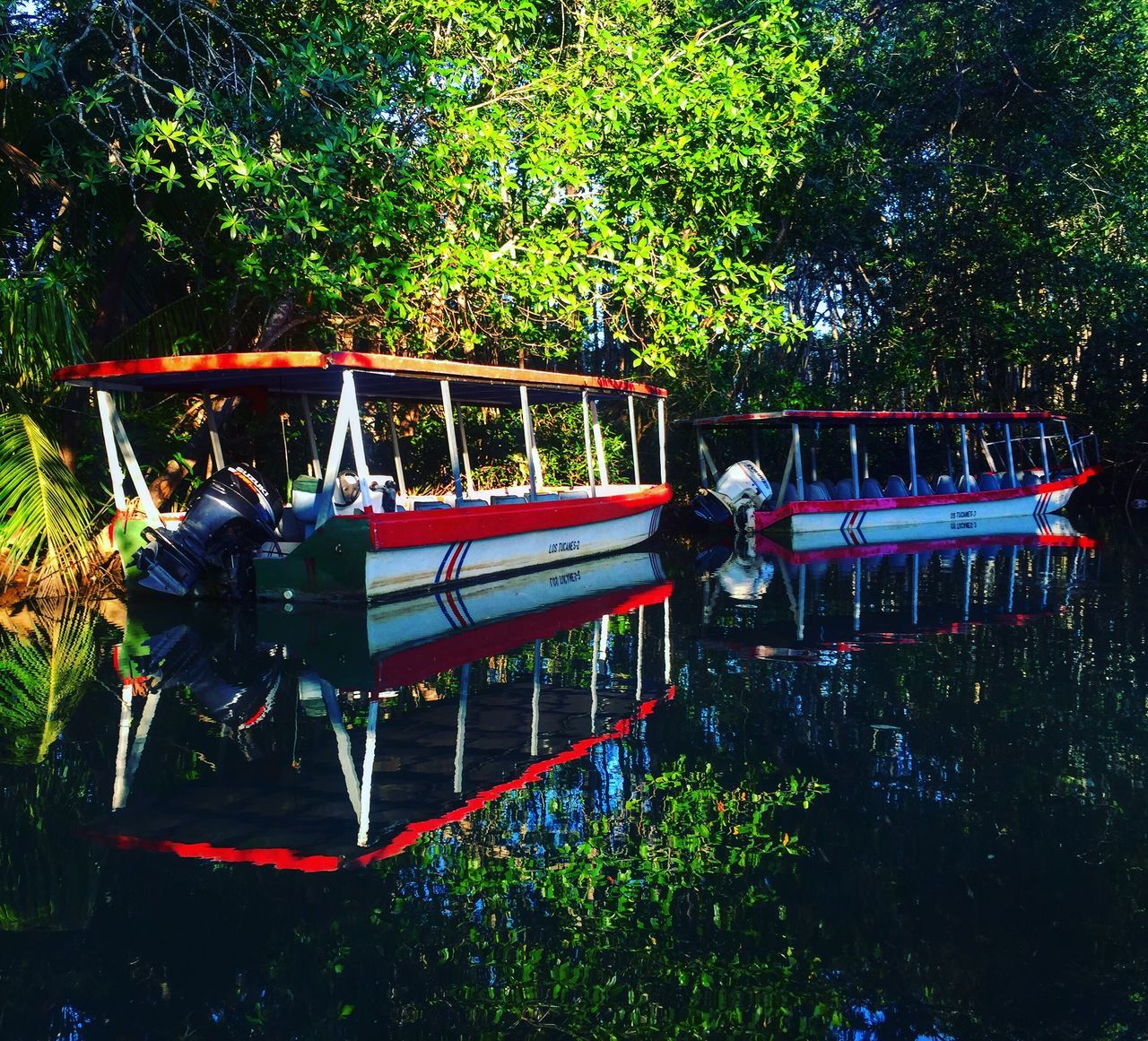 EyeEm Best Shots Mangroves forest The Week On EyeEm Tree Mode Of Transport Transportation Real People Land Vehicle Growth Nature Men Green Color Nautical Vessel Outdoors Large Group Of People Women Day