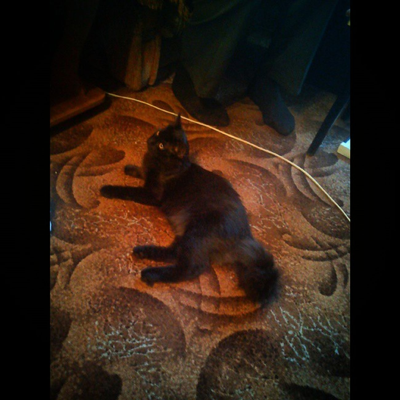 У хороших знакомых. Их красавец Лунтик. черныйкот лунтик КверхуБрюхом Черныш КотэНаркотэ Котэ ПитомецШпитомец ЛюблюКошек Luntik BlackCat kissekatt kitty Katty Catty KittyCat FriendCat SquareInstaPic