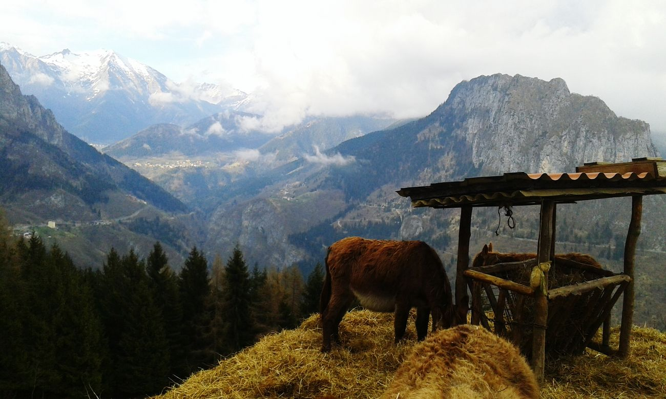 Donkeys Magical Starting A Trip Traveling Italy Naturelovers Hello World Lifeontheroad