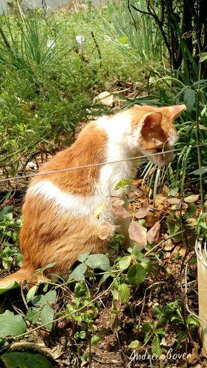 Série: Animais - Gato Doméstico - Cat♡ Cats Gato Gatos Gato😽 Gatosfelizes