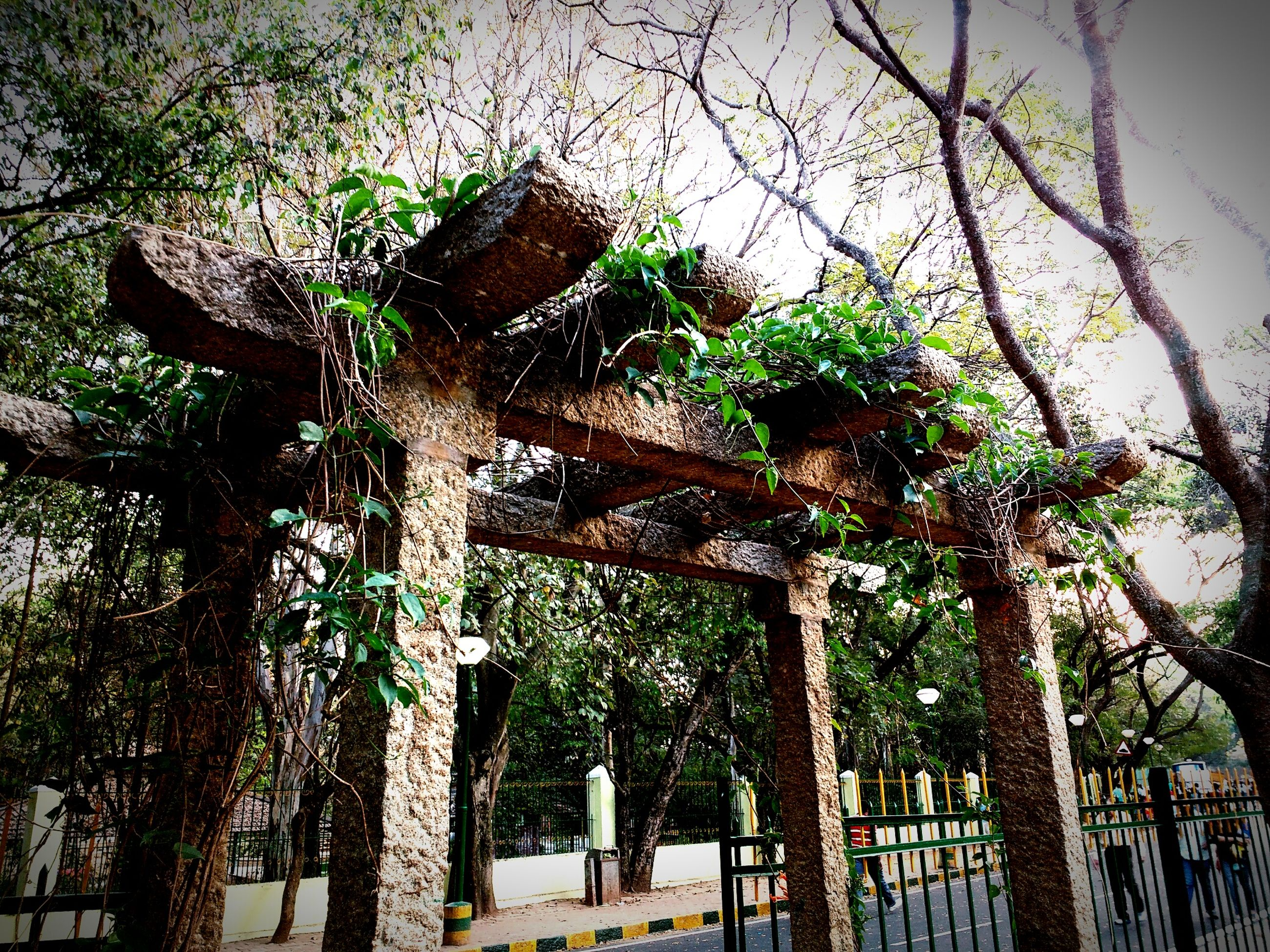 tree, low angle view, growth, wood - material, fence, branch, green color, plant, tree trunk, sky, built structure, nature, day, outdoors, no people, architecture, old, gate, railing, tranquility