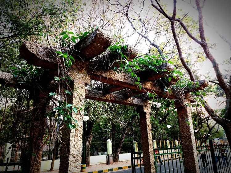 Cubbon Park, Bangalore First Eyeem Photo