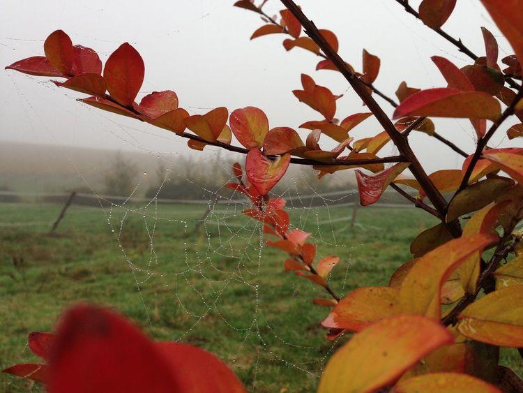 Les dernières couleurs de l'automne... Lot Et Garonne