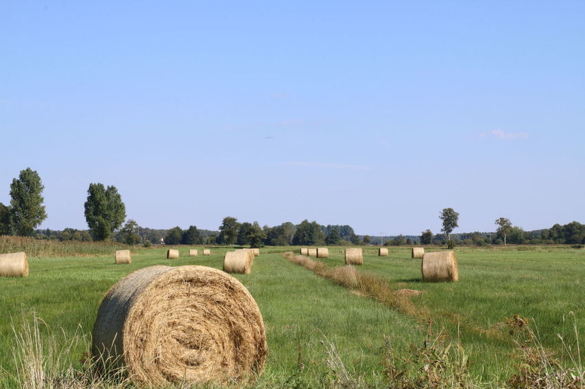 Agricultural Agriculture Bale  Beauty In Nature Blue Clear Sky Copy Space Cultivated Land Day Farm Farmland Field Growth Harvesting Hay Landscape Nature No People Outdoors Rural Scene Scenics Solitude Tranquil Scene Tranquility Tree