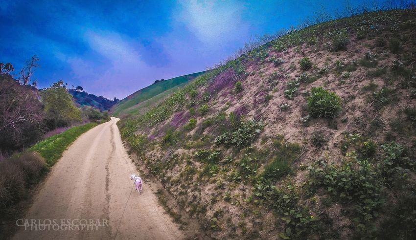 Gopro GoPro Hero3+ Enjoying The Sights On A Hike Mountain Goat My Feet Hurt Nature Walking Dogs Lightroom
