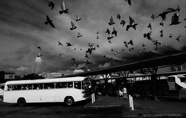People And Places Transportation Street Photography Streetphotography Black & White Streetphoto_bw Fiji Islands SUVA FIJI ISLANDS The Week On EyeEm Monochrome Photography