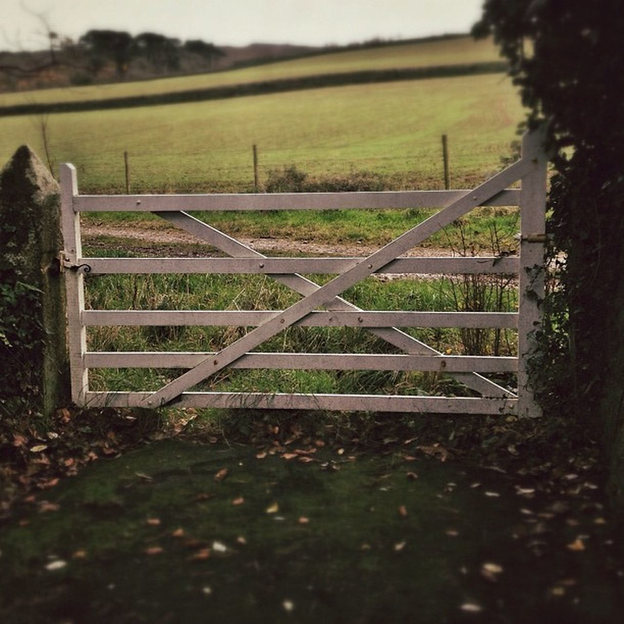 Gateway... #gate #field #improvedimage Field Gate Improvedimage