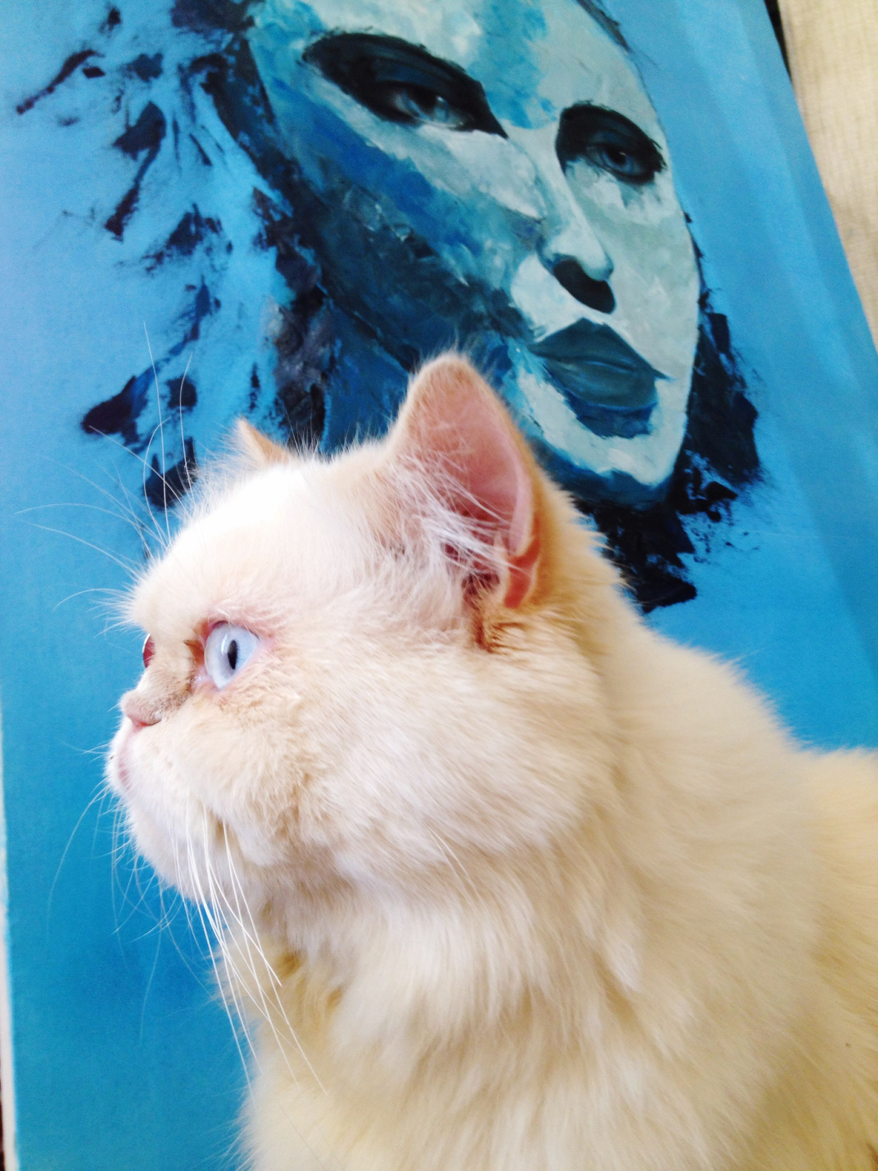 One Animal Animal Themes Pets Domestic Animals Close-up Domestic Cat Animal Head  Mammal Cat Looking Away Feline Zoology Whisker Animal Alertness Animal Hair Curiosity Blue Animal Eye Day Catsofinstagram Cats Cat♡ Cat Eyes Cat Lovers