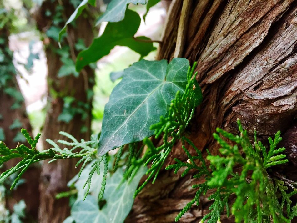 Nature Close-up No People Leaf Plant Growth Nature Green Color Fragility Outdoors Day Tree Beauty In Nature Freshness