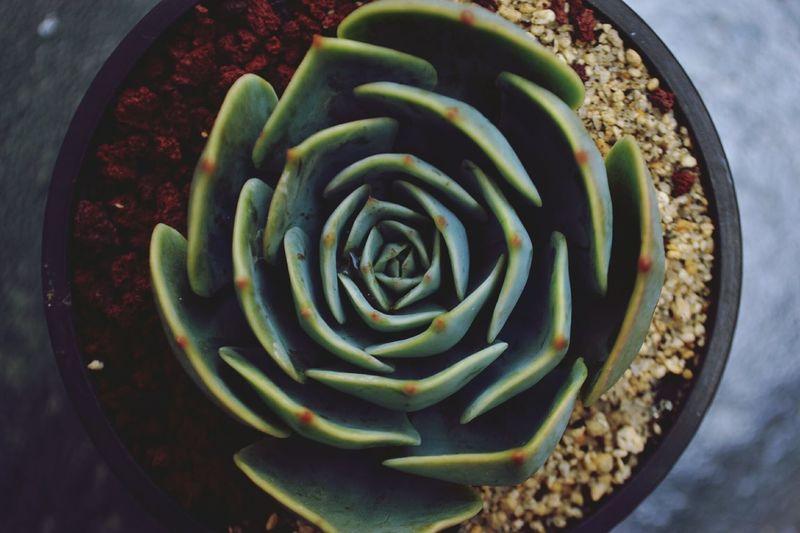 Close-up Cactus Garden Cactusporn Cactus Suculent Succulent Plants