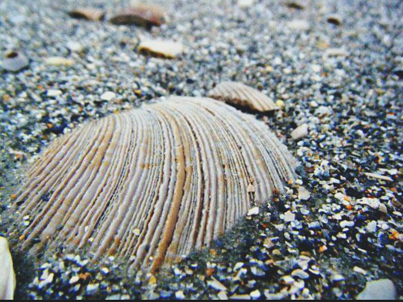 Morning stroll Beach Beach Photography Seashell Seashore Texture Upcloseandpersonal
