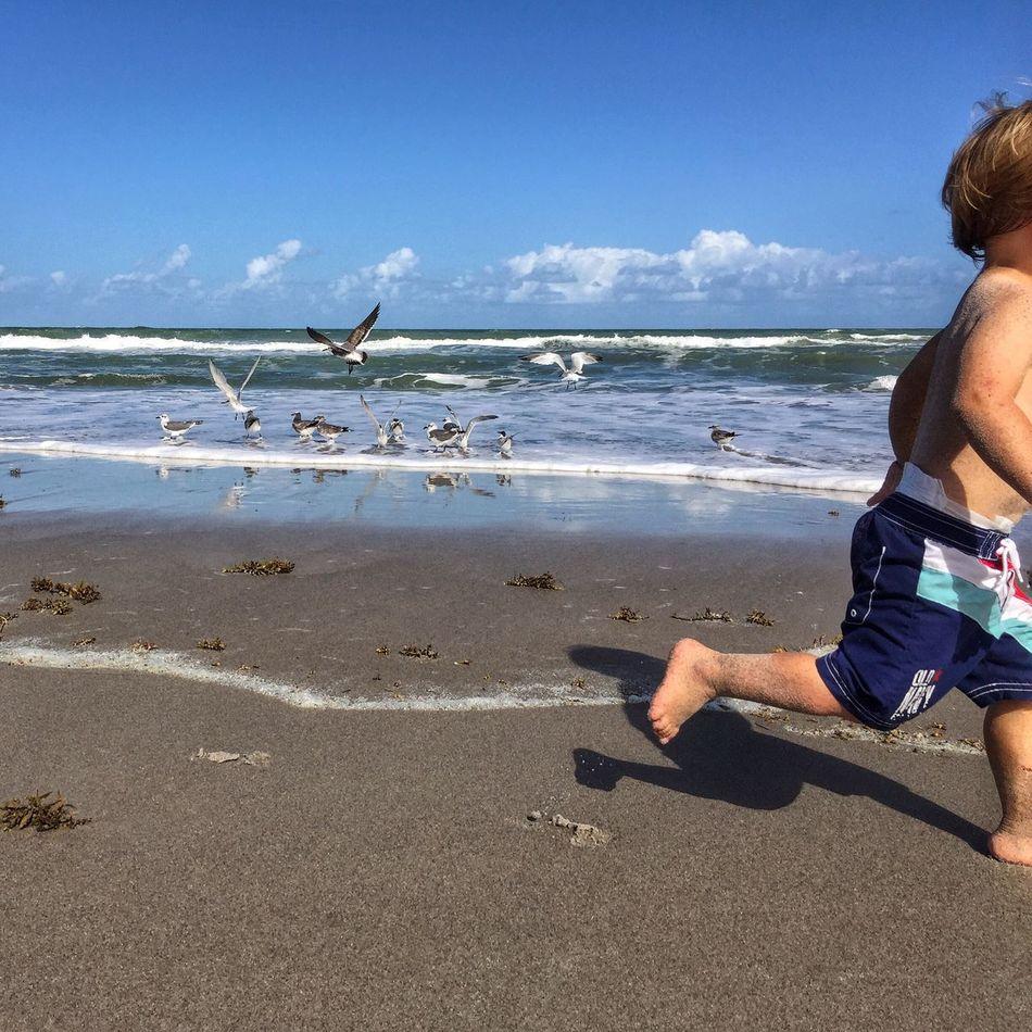 Chasing gulls Childhood Beach Leisure Activity Horizon Over Water Vacations Melbourne Beach, FL Beach Boy Running On The Beach Surf Life Young Boy Shoreline Shorebirds Shore Birds Sandy Sandy Beach Family Time