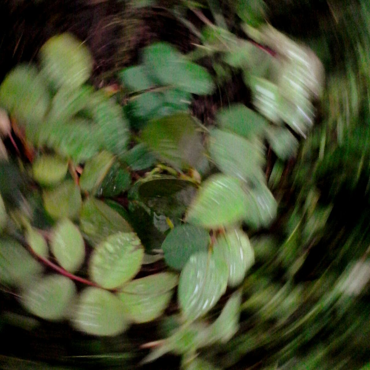 Full Frame Blurred Motion Green Color Selective Focus Growth Nature Green Tranquility Freshness Beauty In Nature Glitch Movement Spin Shot Movement Photography @wolfzuachis Ionitaveronica Wolfzuachis Eyeem Market Green Leaves Plant Nature Spining On Market