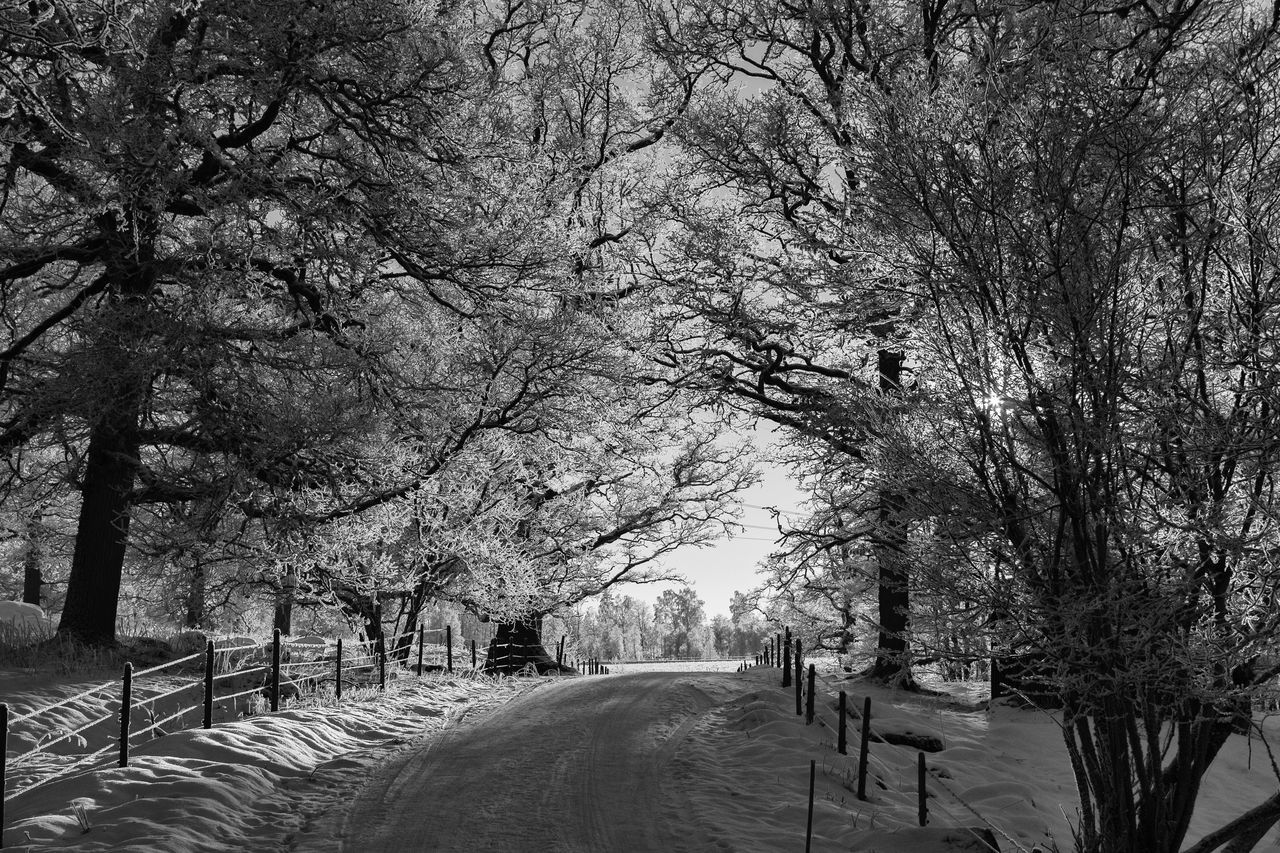 Winter landscape (bnw version) - Tree The Way Forward Nature Branch Winter Cold Temperature Tranquility Snow Beauty In Nature Scenics Monochrome Photography Monochrome Black & White Black And White EyeEm Best Shots - Black + White Exceptional Photographs EyeEm Masterclass Hello World First Eyeem Photo The Week Of Eyeem Tranquil Scene Eye4photography  Road Path Idyllic