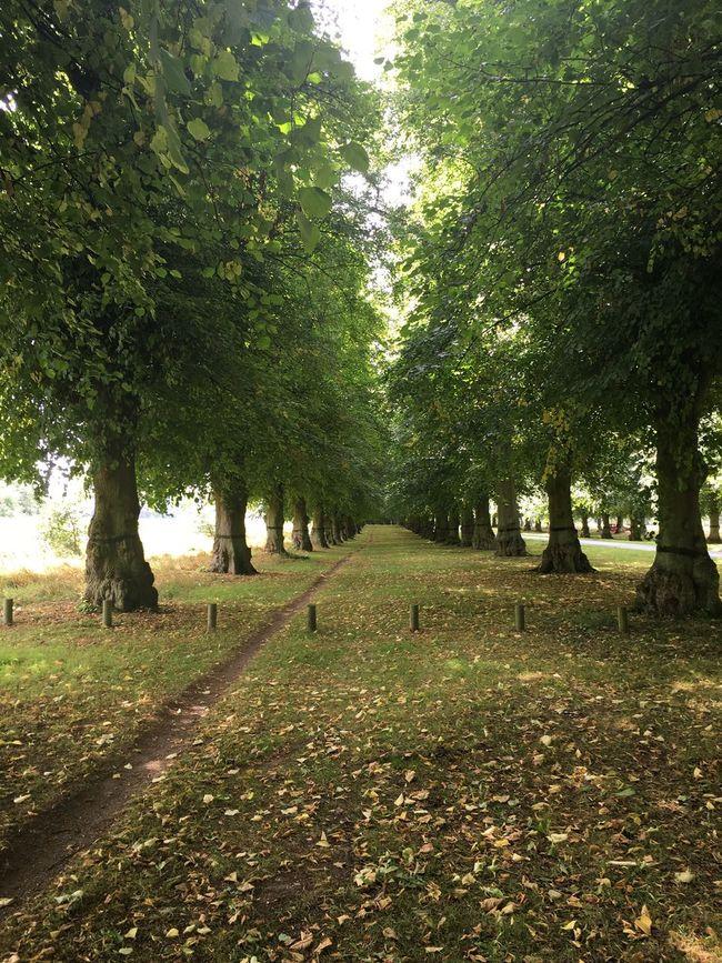 Early Morning Walk Tress Lines Leaves Colour Happy Grass Earlyautumn Season