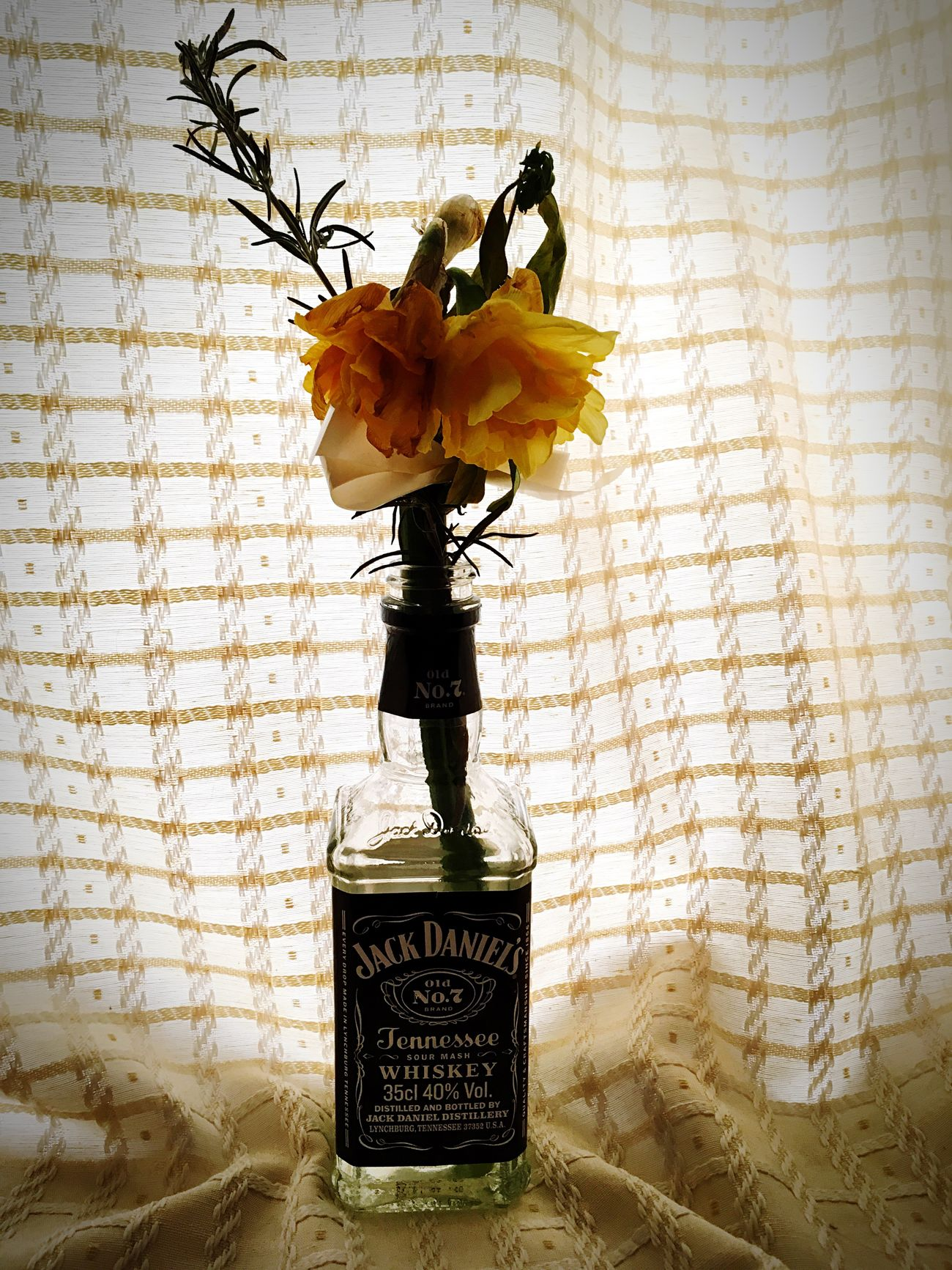 No People Flower Indoors  Close-up Church Gift Jack Daniels Contrast Yellow Background Freshness Nature Day Flower Head Wilting Flowers Beauty In Ordinary Things Beauty In Goodbyes