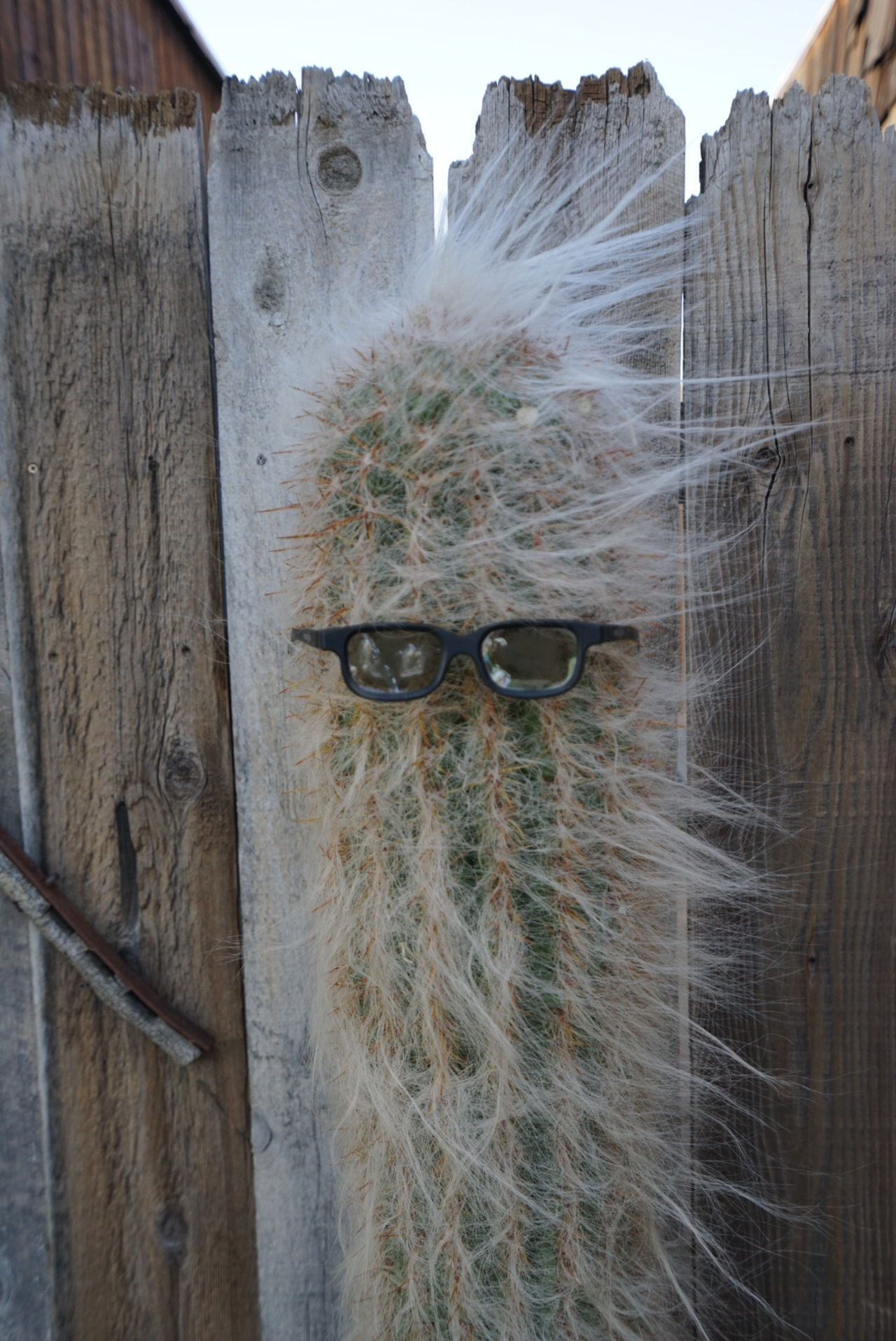 ©Amy Boyle Photography Cactus Cactus Garden Close-up Day Eyeglasses  Outdoors Portrait