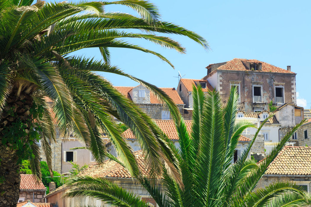 Beautiful architecture in medieval town of Cavtat in Croatia Ancient Architecture Architecture Beautiful Cavtat  Croatia Day Family Vacation Green Holiday Luxury Life Medieval Nature Outdoors Palms Roofs Summer Tourism Tourist Travel Travel Destinations Vacation Windows