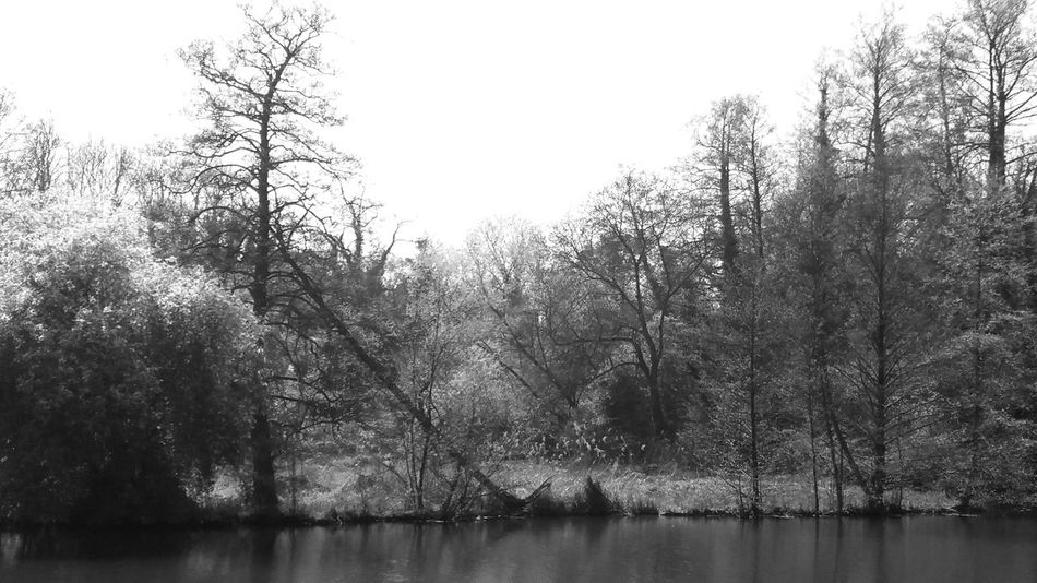 Beauty In Nature Black And White Fallen Tree Nature Noir Et Blanc Tranquility Tree