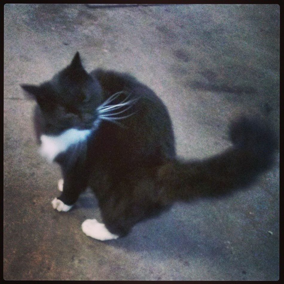 Elwood the kitty