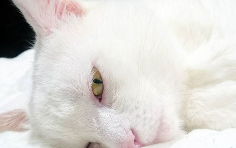 Nata 💗 Excellent_kittens Excellent_cats Catsofinstagram Kittensofinstagram Kitten Cats Cat Catoftheday Gato Whitecat Cute Bestcats_oftheworld Bestmeow Meow Meow_beauties Meowbox Catslover Catstagram Catsandwomen Bestoftheday Tagsforlikes Instago Instacool Photooftheday All_shots like4like