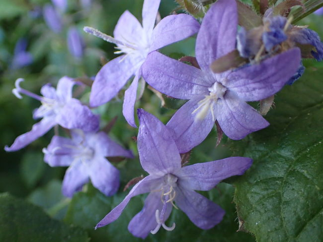 Beauty In Nature Close-up Flower Flower Head Fragility Growth Nature Petal Plant Purple