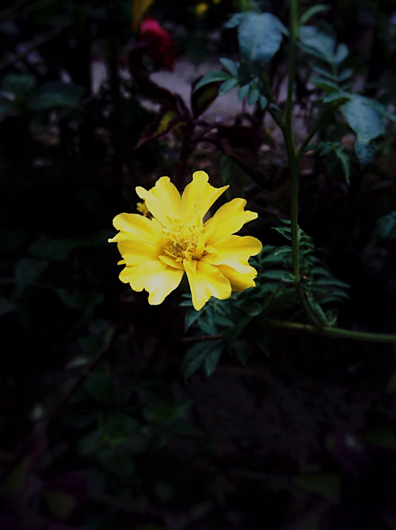 Enjoying The Flower Taking Photos Nature_collection Nature Photography Check This Out Yellow Flower Yellow Green Relaxing Provincetown  Philippines Eye4photography  EyeEm Best Shots Beautiful