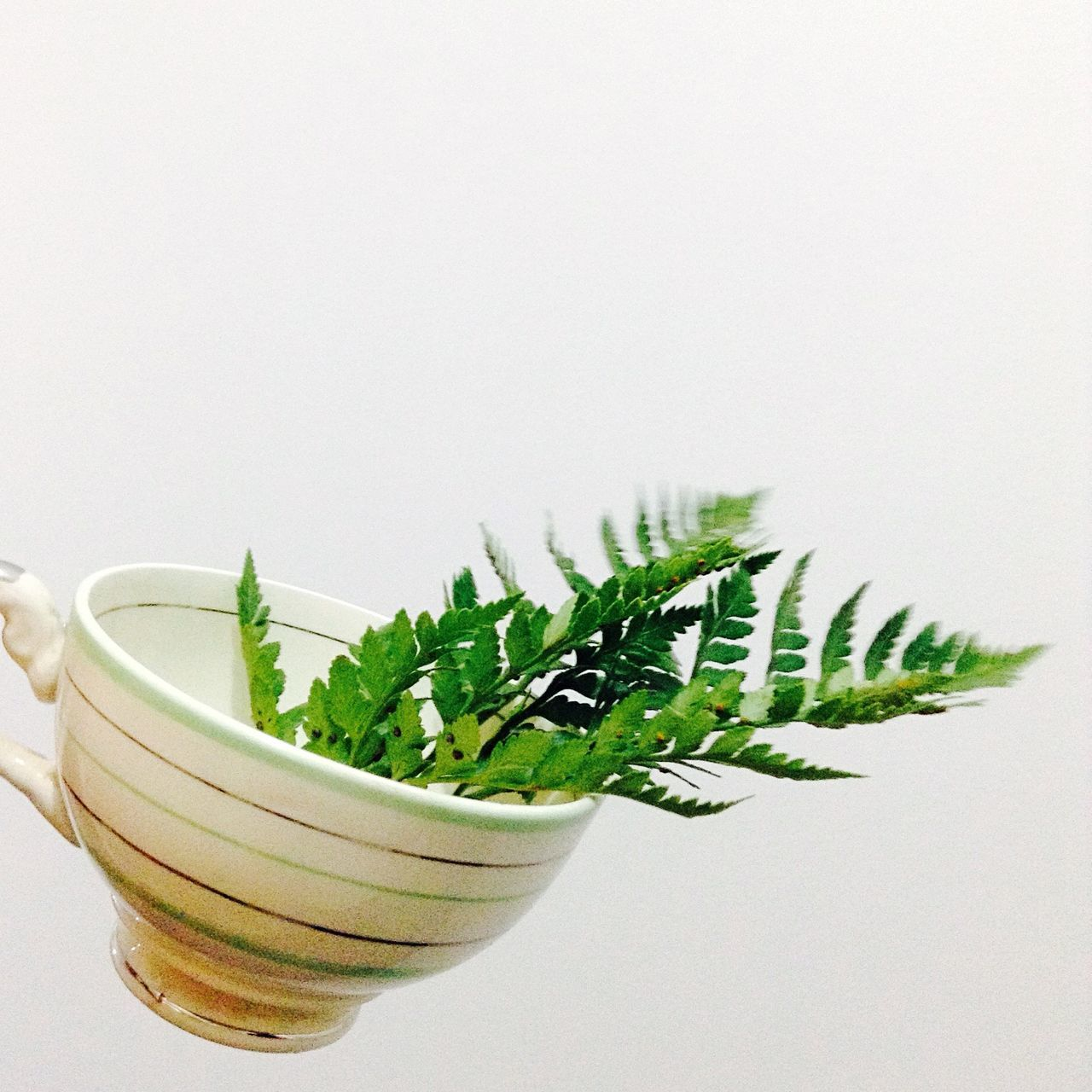 white background, studio shot, green color, no people, copy space, indoors, close-up, bowl, plant, herbal medicine, food, freshness, day