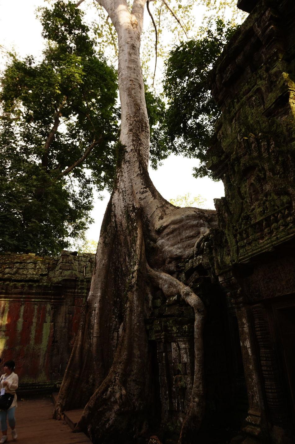 Ancient Angkor Thom Angkor Wat ASIA Cambodia History Siem Reap Temples