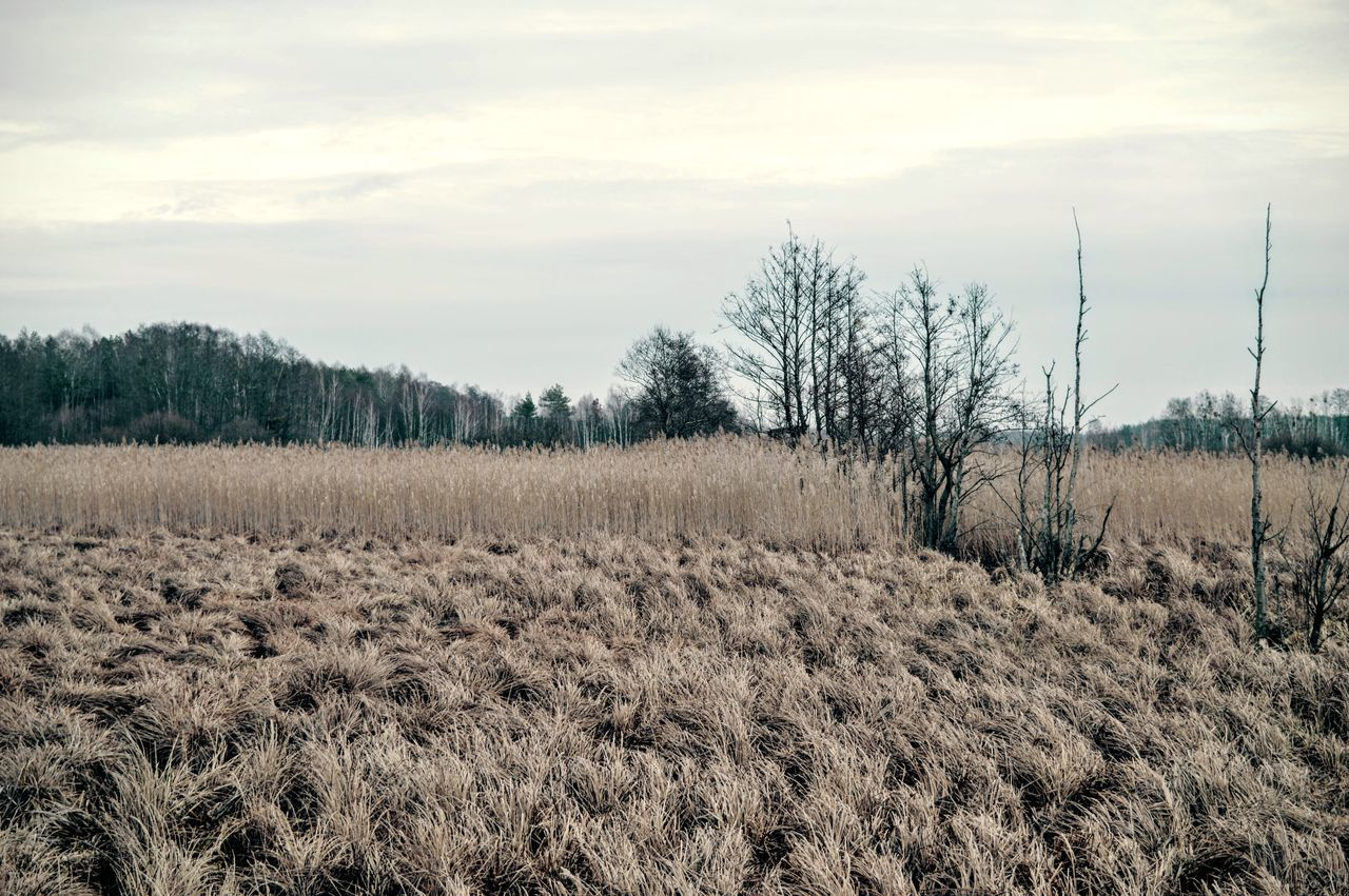 Beauty In Nature Cloudy Day Early Spring Eastern Europe Europe European Landscape Fields Gloomy Gloomy Weather Grass Idyllic Kampinos Landscape Nature No People Non-urban Scene Outdoors Poland Scenics Sky Spring Tranquil Scene Tranquility Tree