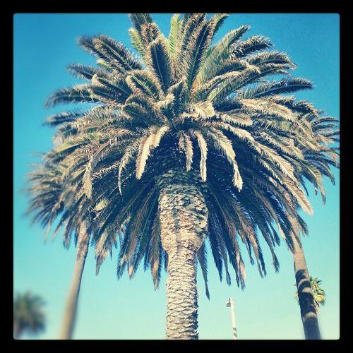 Californialove Sideshowbob