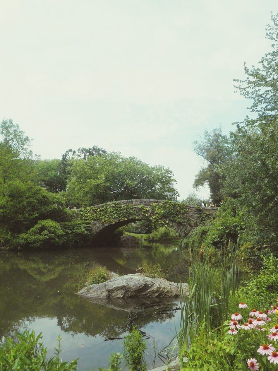 Cityscapes New York City CentralPark Bridge Nature_collection Beauty Redefined My Favorite Photo Citytrip