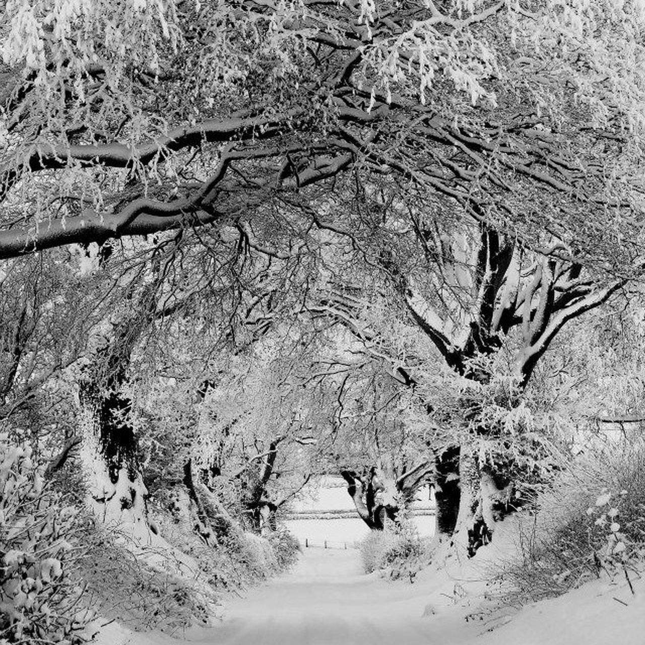 tree, walking, nature, branch, day, bare tree, outdoors, real people, landscape, beauty in nature, road, growth, winter, snow, animal themes