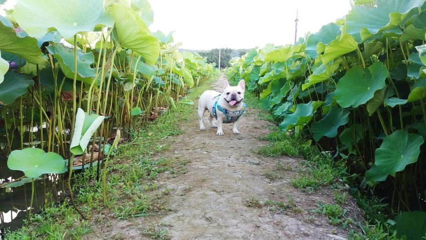 Enjoying Life Nature Photography Nature_collection Plants And Flowers Nice Atmosphere The Great Outdoors - 2015 EyeEm Awards Frenchbulldog Bulldogfrances Enjoying Life Pets Corner