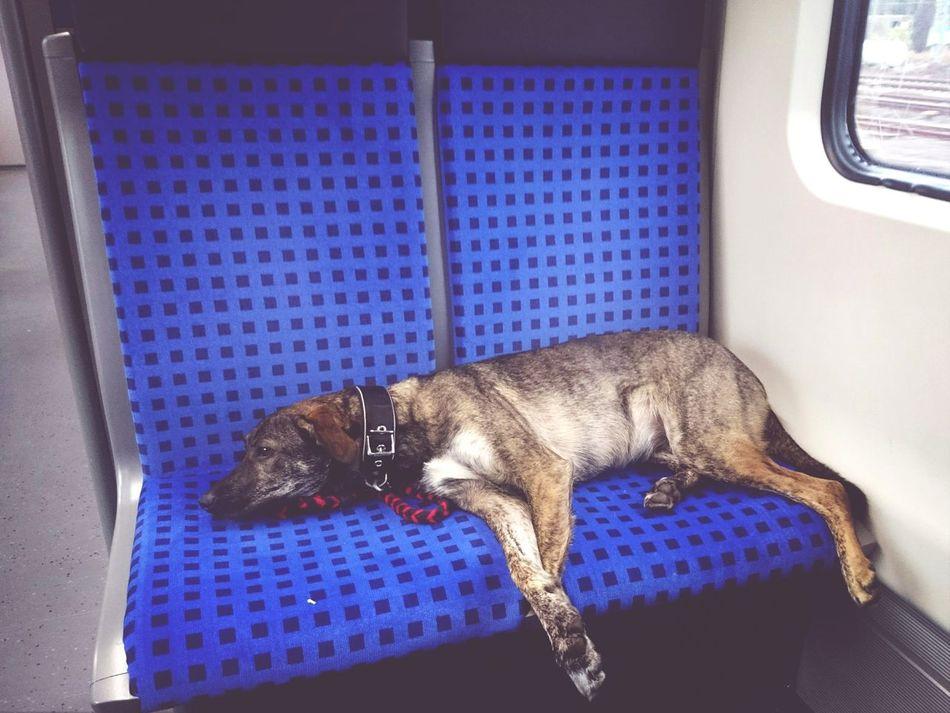On my way Travel Travelingwithdog Dog Sleepy