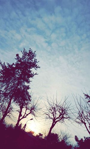 Hi! Natury Relaxing Poland Biutifull Day Photo Forest EyeEm Tree Sky Photography