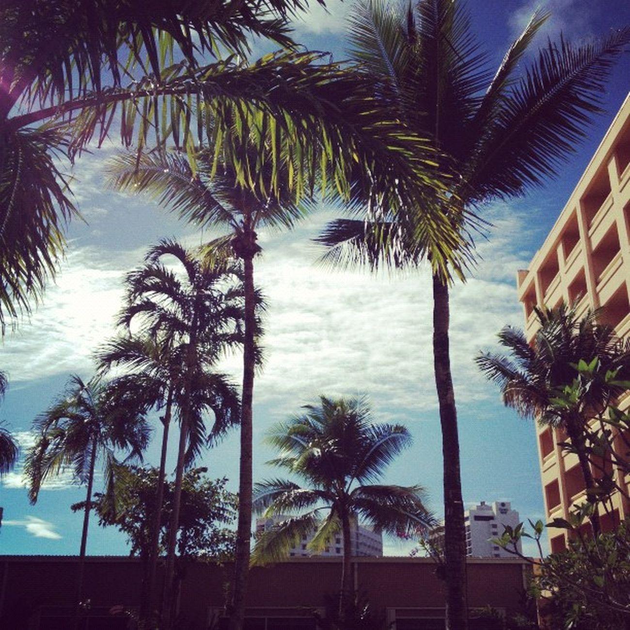やっぱ南国だね。日本で見た週間天気は全部、雨だったけど晴れ間も出てよかった♪ Guam Webstagram Hafaadai グアム