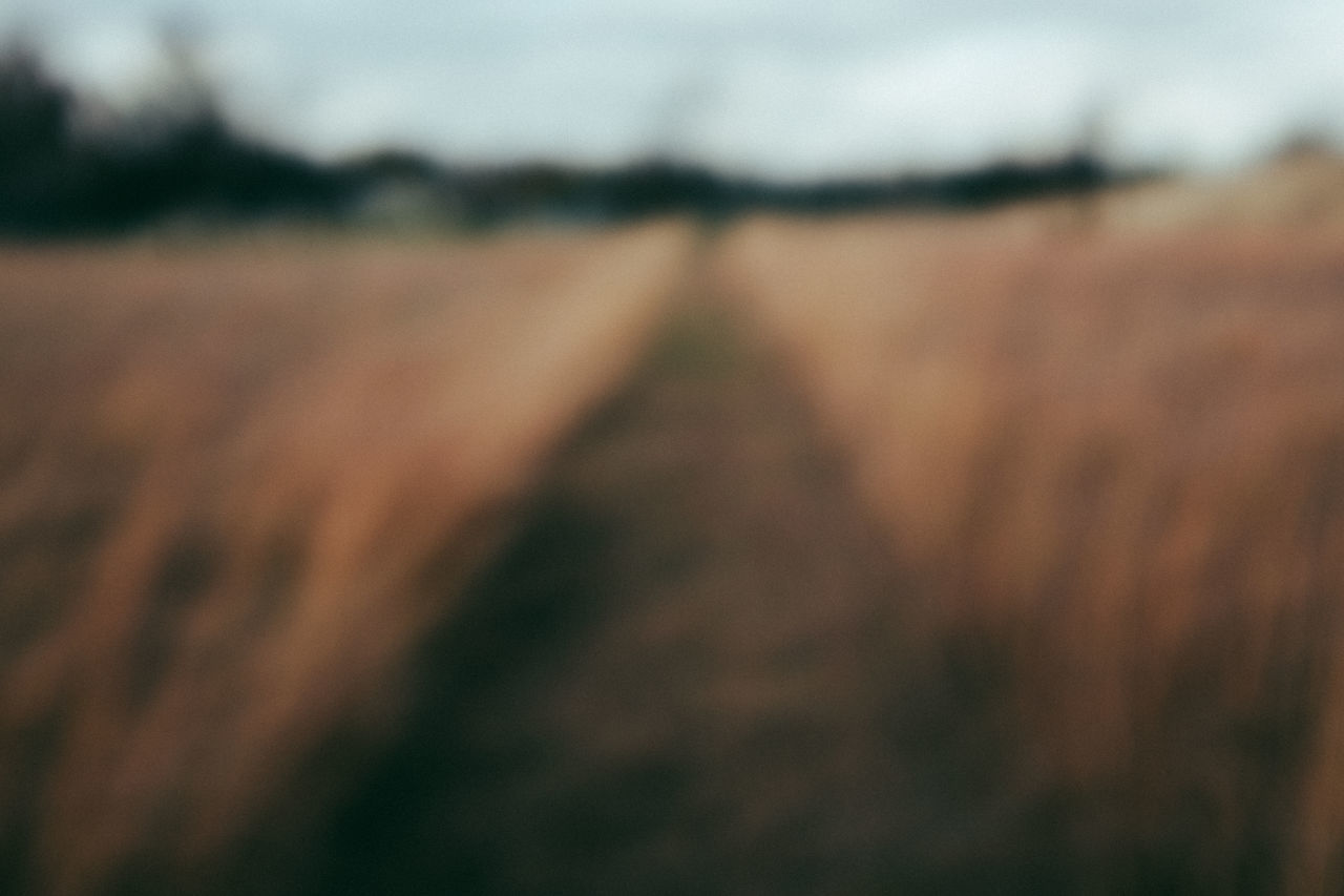 Venturing into the unknown Abstract Adventure Depth Of Field Discovery Field Journey Leading Meadow Moving Forward  Nature Onward Outdoors Path Pathway Tall Grass The Unknown Trail Unclear Unknown First Eyeem Photo