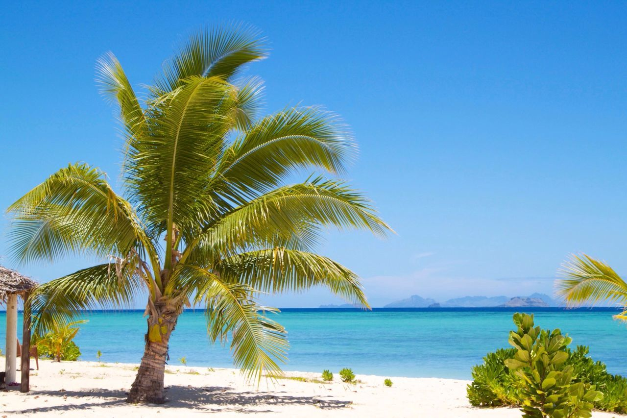 Sunshine Palm Trees Blue Blue Sky Serenity Happy Relaxing On The Beach Beach Deserted
