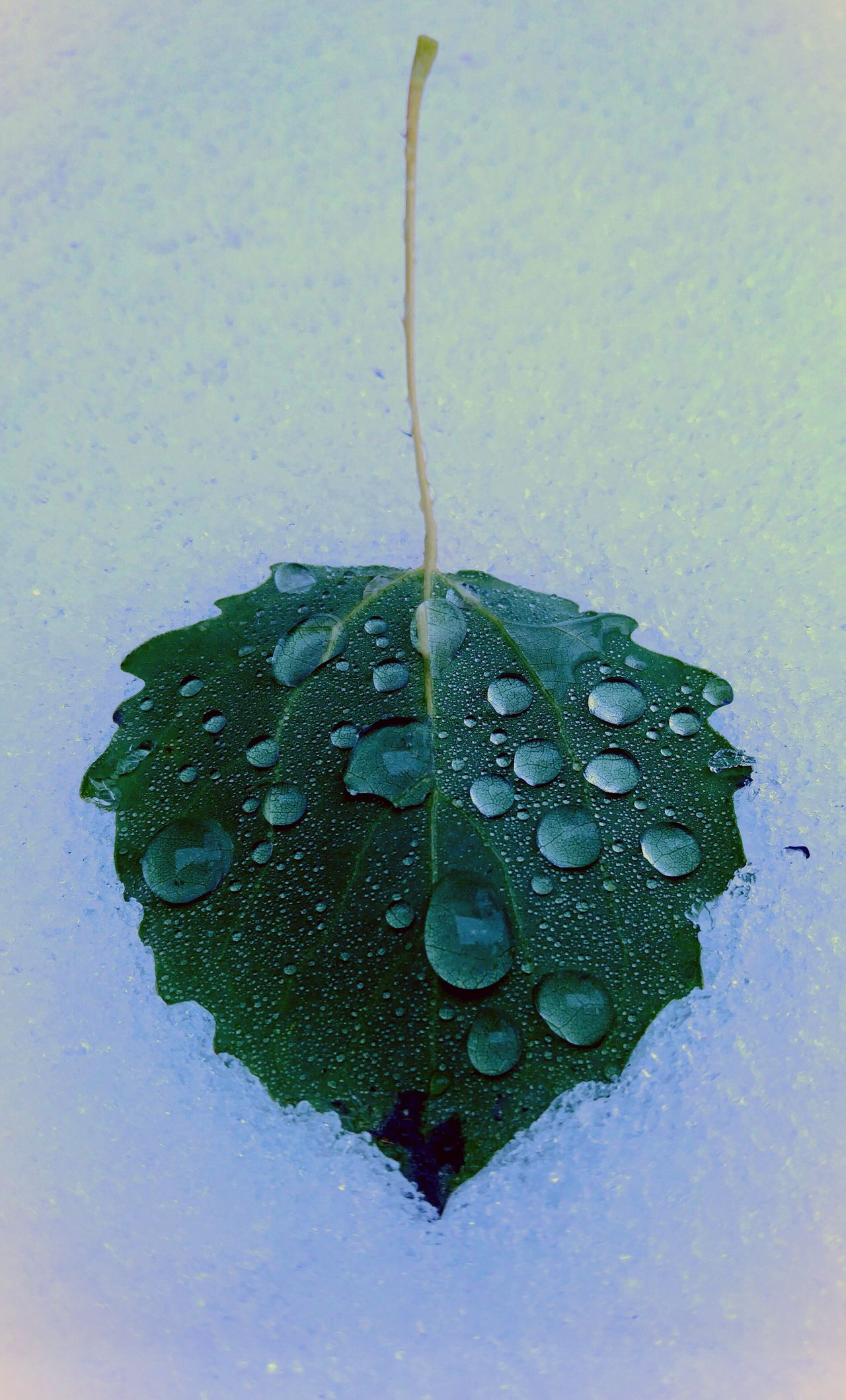 Beads Water Drop Outside Taking Photos EyeEm Gallery Natural Beauty Close-up Mothernature Walking Around Real Life Detailoftheday Good Morning Beads Of Water EyeEm Nature Lover Mother Nature Leaf Vein Leaf 🍂