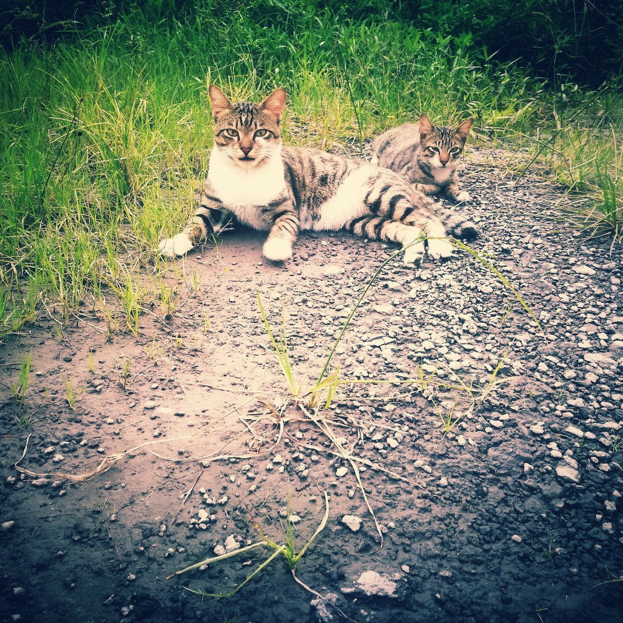 Wild cat. Domestic Cat Animal Themes Outdoors Domestic Animals Pets Huaweiphotography Hua Wei P9 Plus Animal Huawei P9 Plus HuaweiP9 Homelessness  HuaweiP9Photography Homeless Cats Homeless Cat Kitten Homeless Animal Animalphotography Homeless Kitten Looking At Camera Homeless Cat Mammal