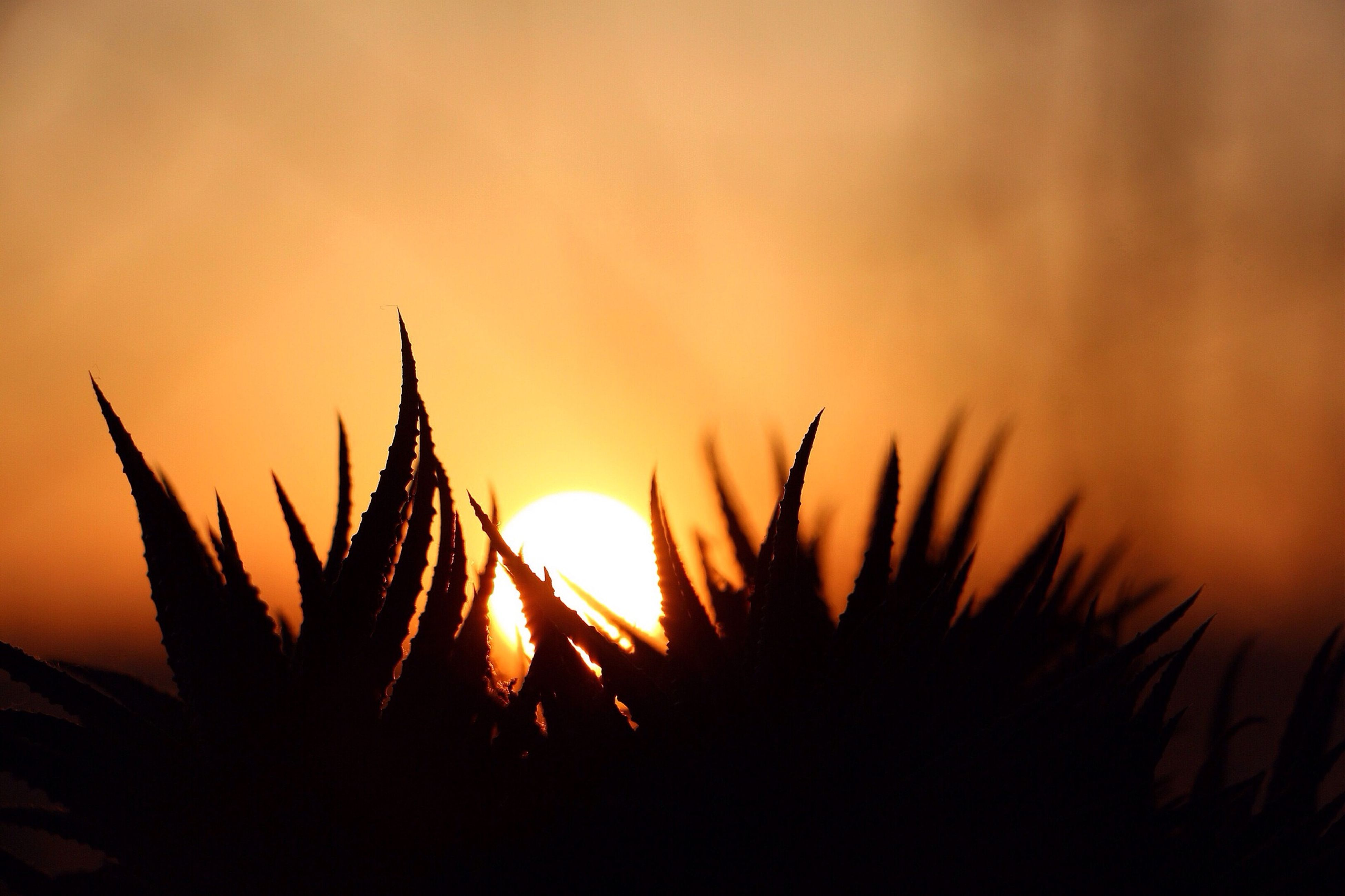 sunset, silhouette, growth, plant, nature, beauty in nature, orange color, sun, tranquility, focus on foreground, sky, close-up, tranquil scene, selective focus, outdoors, scenics, stem, field, no people, sunlight