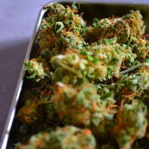 Weed photo of the day? Weedphotooftyeday Weed Imaboutthatlife Dank smokeweedeveryday stoner4life kush maryjane