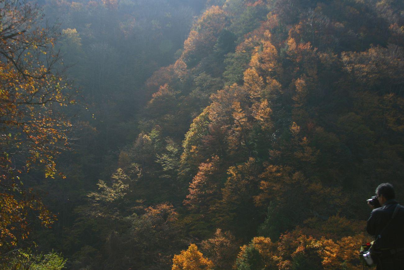 松川渓谷🍂🍁 Taking Photos Enjoying Life Naturelovers Taking Photos Nature_collection Autumn Colors River View Mountain View RYU-KI🇯🇵😃 ナイスショット中のリューキ先生をスナイプ😂