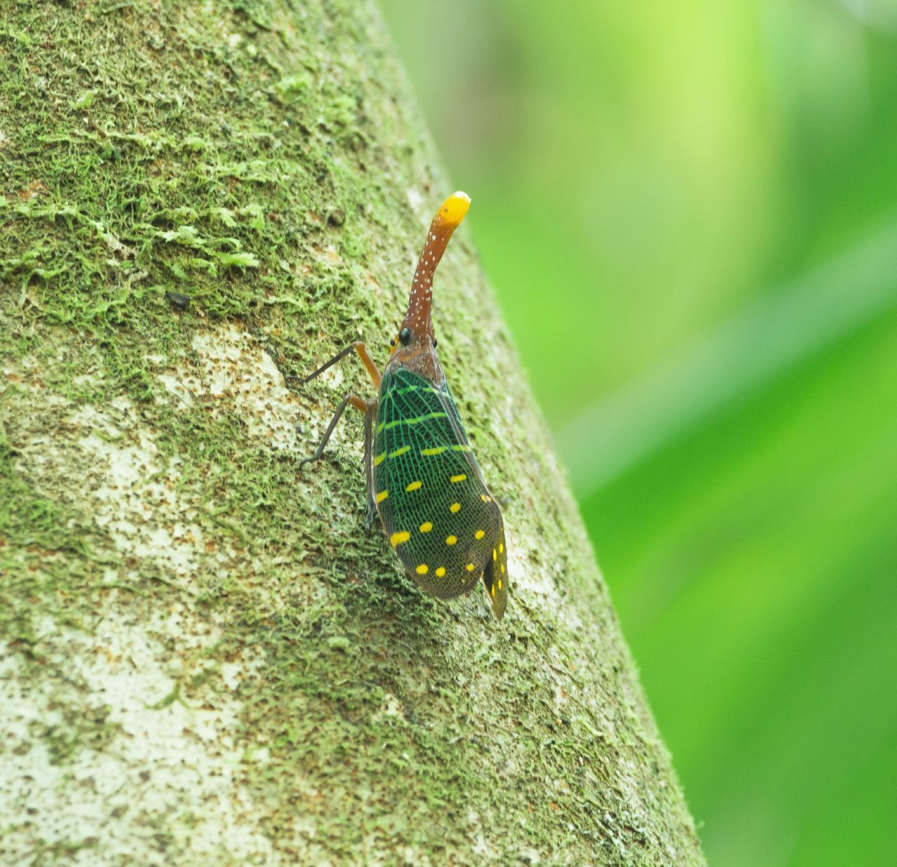 one animal, animal themes, animals in the wild, close-up, nature, day, insect, focus on foreground, green color, no people, outdoors, animal wildlife, beauty in nature