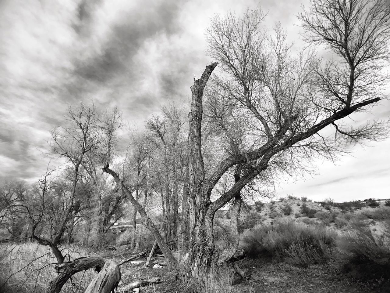 Bare Trees On Field Against Cloudy Sky