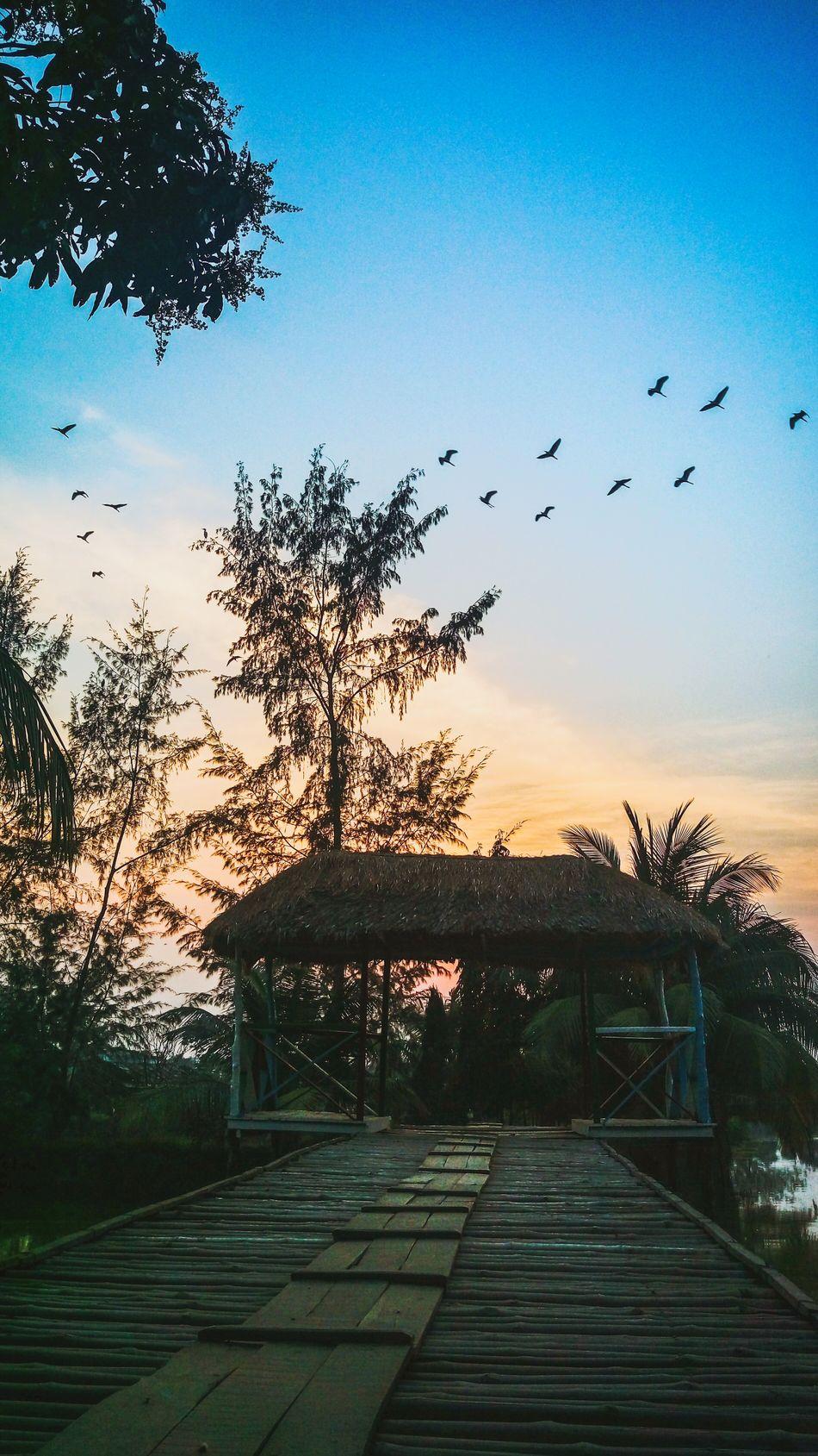 Naturelovers Mobilephotography Sundown Beautiful Nature Evening Sky Migratory Birds Spring! Natgeo Traveling Relaxing EyeEm Gallery